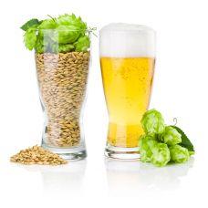 Солод, хмель для пива и виски